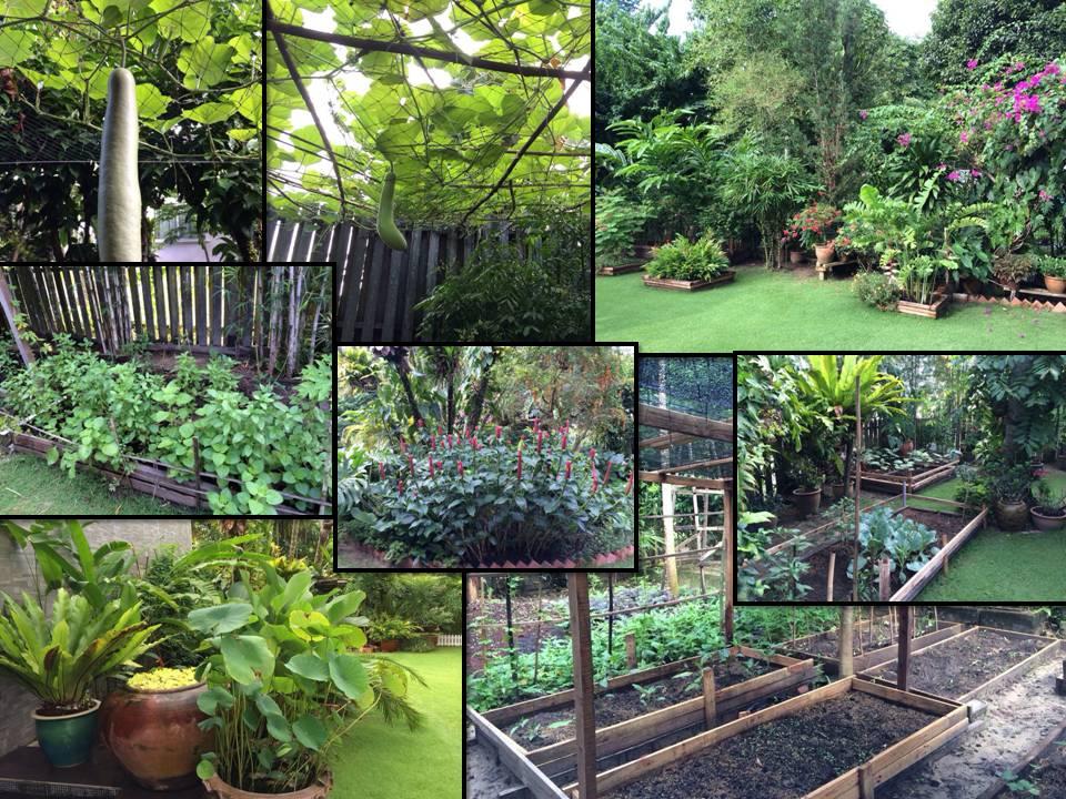 Brunei Hazel garden2