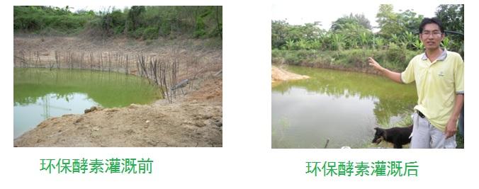 何永祥先生环保酵素灌溉后