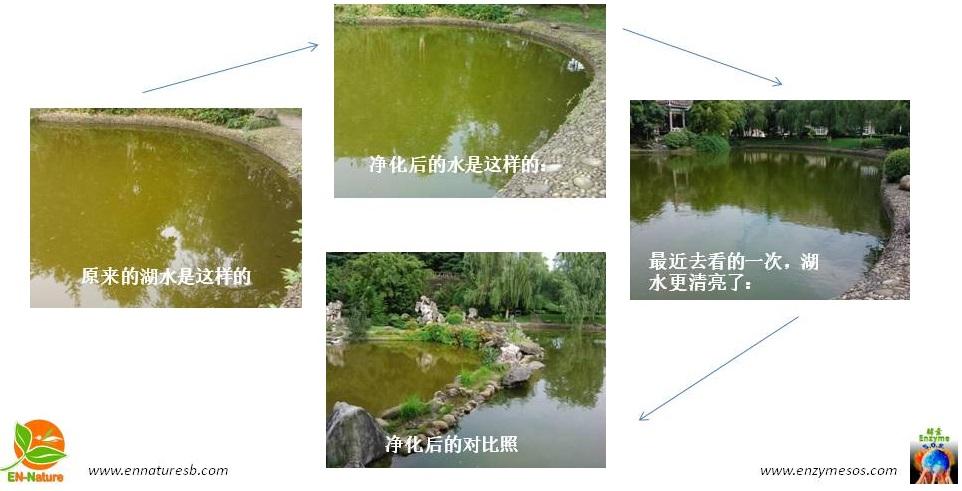 四川南充环保酵素净化大学校园湖水