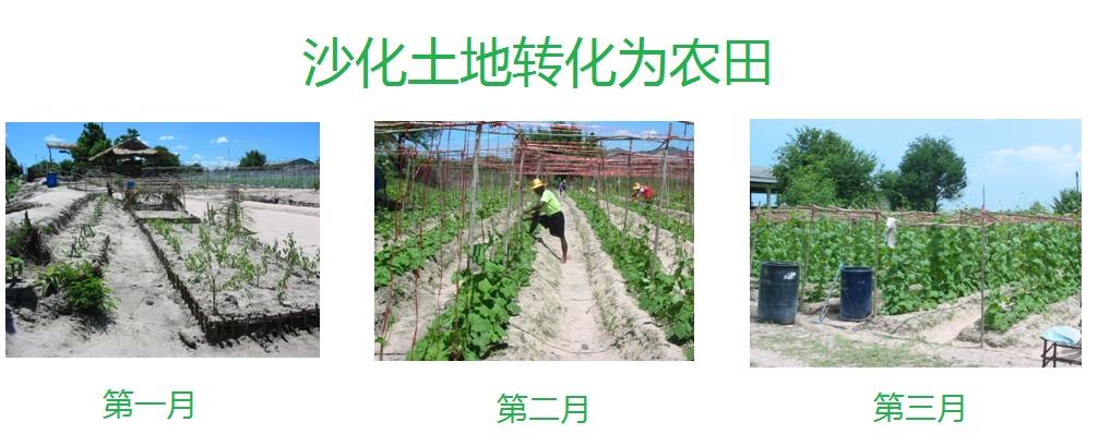 沙化土地转化为农田